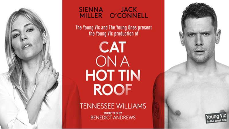 homosexuality in cat on a hot tin roof